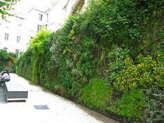 le mur végétal pour jardin, terrasse, balcon et l'intérieur
