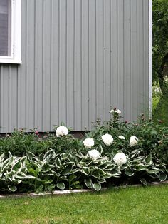Wooden House, Plants, Home, Planters, Haus, Plant, Homes, Houses, Planting