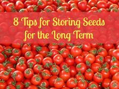 Useful advice for storing seeds for the long term  | Backdoor Survival