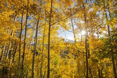 Durango Colorado is a great spot to watch the fall colors. #Fallage