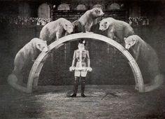 Miles Aurora and her polar bears 1898