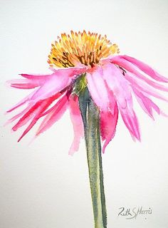 A Single Pink Echinacea Flower Painted In Watercolor On A White Background. Basic And Elegant. The Original Work Measures And Is Painted On Fabriano Artistico Paper. Purchase This Artwork On Stickers, Stationery Y Wall Prints. Watercolor Pictures, Watercolor Cards, Watercolour Painting, Floral Watercolor, Painting & Drawing, Watercolors, Easy Watercolor, Watercolor Pencil Art, Illustration Blume