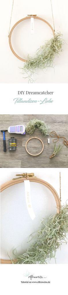 Traumfänger aus einem Stickrahmen selber machen - believe in yourself - Holz-Stickrahmen mit Pflanzen. Die Pflanze hat Luftwurzeln und eignet sich bestens für DIY's - folgt den doityourself Ideen auf elfenweiss.de
