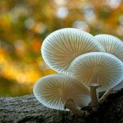 10 tips voor herfstfotografie  © herfst, herfst fotografie, 10 tips voor herfst fotografie