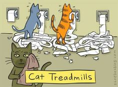 Funny pictures about Cat treadmills. Oh, and cool pics about Cat treadmills. Also, Cat treadmills. I Love Cats, Cute Cats, Funny Cats, Funny Animals, Cute Animals, Animal Jokes, Silly Cats, Funny Jokes, Funniest Animals