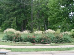Front flower bed and rear @ fire pit. example of Miscanthus 'Adagio' is a wonderful companion plant to Knockout Roses. The dark green Miscanthus foliage is the perfect backdrop to the sea of color that the roses provide from April until December Landscaping With Roses, Modern Landscaping, Outdoor Landscaping, Landscaping Plants, Front Yard Landscaping, Landscaping Ideas, Landscape Borders, Landscape Design, Rose Companion Plants