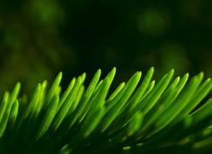 Abstract macros can make exceptionally beautiful photographs. They're the kind of photos that make excellent framed images. Book Photography, Macro Photography, Abstract Images, Macros, Close Up, Plant Leaves, Canning, Photographs, Photos