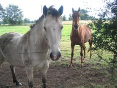 Horses Equines and people secure an ancient connection. Asian wanderers most probably domesticated the first horses some 4000 years back…