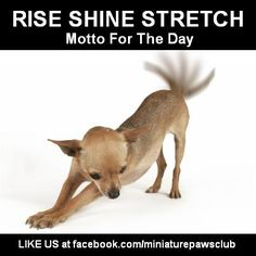 rise n shine stretch ~ motto for the new day