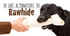 Unless you've not had internet access for years, you probably understand how dangerous rawhide is to your dogs. Rawhide is made of the inner hide of a cow or other animal after it has undergone chemical...