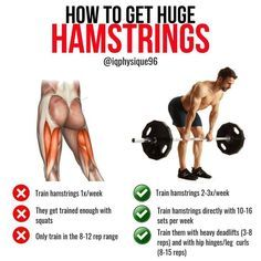 The hamstrings are the often neglected muscle of the body along with the calves. They are composed of 3 muscles: the semimembranosus, semitendinosus, and biceps femoris. They all are biarticular and thus cross both the hip and knee joints. Their functions are hip extension, like when you thrust, and knee flexion, like when you bend your leg. Training the hamstrings around 2 times per week in a variety of rep ranges are your best bet. Include both hip extension and knee flexion exercises. Weight Training Workouts, Gym Workout Tips, Leg Training, Exercise Workouts, Fitness Exercises, Workout Plans, Workout Videos, Best Hamstring Exercises, Hamstring Workout