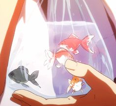 Goldfish In A Bag. Anime.