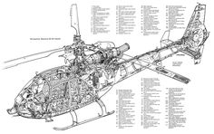 Gazelle cutaway
