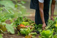 African Safari, Tanzania, Old World, Vegetable Garden, Herbs, Vegetables Garden, Herb, Vegetable Gardening, Veggie Gardens