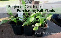 Beginner Gardeners - Purchasing Fall Plants for the Garden.  Garden Up Green