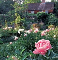 Tasha Tudor and peonies. what more is there to say? http://www.deeprootsathome.com/wp-content/uploads/2012/05/TashaTudor-garden-Large-Web-view.jpg