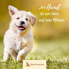 # sayings - Hundesprüche - Chien Animals And Pets, Baby Animals, Funny Animals, Cute Animals, Baby Dogs, Pet Dogs, 9gag Funny, Funny Cats, Chihuahua