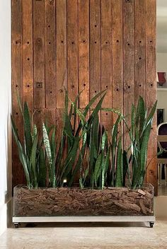 To keep your indoor houseplants healthy and thriving they will occasionally need to be pruned or re-potted. The process is very similar to the plants and just Small Space Interior Design, Interior Design Living Room, Plantas Indoor, Indoor Waterfall, Cedar Planters, Unique Plants, Snake Plant, Interior Plants, Plant Decor