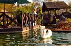 Safari Garden Centre Gorgeous
