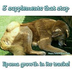 Natural remedies to shrink dog lipomas!