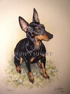 "Manchester terrier, 12"" pen and ink with watercolour."