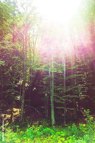 Busteni si Sinaia - 29 & 30 August 2015 - Romulus ANGHEL - Picasa Web Albums 30 August, Picasa Web Albums, Northern Lights, Nature, Photos, Travel, Naturaleza, Pictures, Viajes