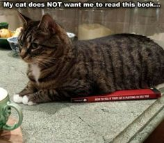 You Will Read When I Say You Can Read