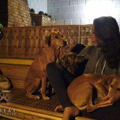 "Story telling. Dogs attention, ""tell me more"". . #retreatbelanatureza #doglover #love #peace #nature #naturelover #mothernature #brazil #retreat #yoga #meditation #goodvibes #happy #healing #therapydog #sun #travel  #relaxing #positive  #naturelovers #dog #dogs #dogsofinstagram #instadog #animal  #dogstagram #ilovemydog #natureretreat #instanature  #wanderlust"
