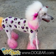 144 Best Reasons I Want To Get Dog Hair Color Images On Pinterest