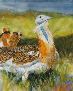 Brian Baxter: Great Bustard Bird Species, Rooster, Birds, Artist, Painting, Animals, Animales, Animaux, Bird