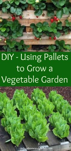 DIY - Using Pallets to Grow a Vegetable Garden. Here is aDIY - Using Pallets to Grow a Vegetable Garden. Not only using wood pallets to grow a vegetable garden, you can also grow, fruits, flowers and so many other DIY projects using wood pallets.