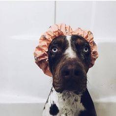 .....looking for a shower buddy? We might have found him.... #showerbuddy #showerparty  picture *borrowed* from @beckettgram