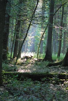 UNESCO World Heritage Site, Bialowieza National Forest, Podlaskie, Poland. The Beautiful Country, Beautiful Places, Places Around The World, Around The Worlds, Visit Poland, National Forest, World Heritage Sites, Homeland, State Parks