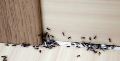 Got an ant problem? Here's how to get rid of ants using 13 common items you already own—and keep the pests away for good. Kitchen Ants, Kitchen Items, Sugar Ants, Ant Problem, Ants In House, Black Ants, Get Rid Of Ants, Mosquitos, Salud Natural
