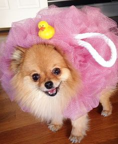 """30 adorable pets who just won """"Best Halloween Costume"""""""