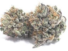 cannabis samen bestellen White Domina