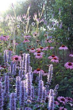 Eupatorium maculatum, Veronicastrum, Helenium Moerheim Beauty, Bistorta amplexic … – Famous Last Words Beautiful Gardens, Beautiful Flowers, Prairie Garden, Garden Borders, Plantation, Plant Design, Garden Styles, Dream Garden, Garden Planning