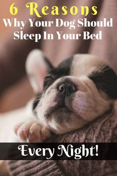 is sleeping with your dog in the same bed really beneficial? The answer is yes! Here are the main 5 reasons why you should sleep with your dog