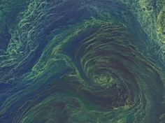 This striking green-blue image isn't a lost work of Van Gogh - it's a giant, growing bloom of microscopic plants and animals in the Baltic Sea, which NASA photographed from space.