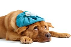 Dog first aid- some info works for cats too.
