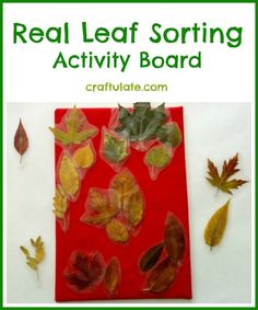 Real Leaf Sorting Activity Board by Craftulate