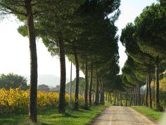 Cantine Giorgio Lungarotti - Umbria www.lungarotti.it
