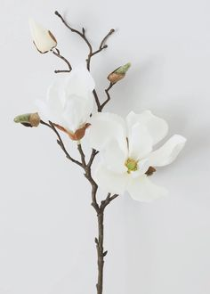 Silk Magnolia in Cream White 19