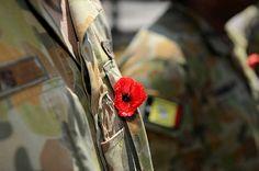 Australian soldier wears a poppy Remembrance Day Poppy, Poppies, Poppy, Poppy Flowers