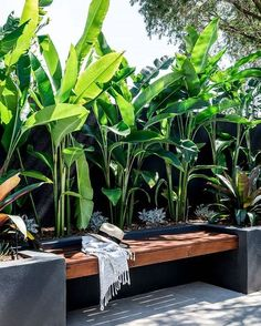 tropical garden Another look at our Bardon garden which recently won landscapeqld Construction Excellence Awards for Contractor Design amp; Construct 1 + Residential 2 by cathyschusler . Small Courtyard Gardens, Small Courtyards, Outdoor Gardens, Tropical Garden Design, Tropical Landscaping, Landscaping Ideas, Tropical Decor, Backyard Ideas, Tropical Interior