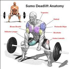 One of the best full-body workouts you can do. This is why. #Deadlift #Infographic #WeightTraining