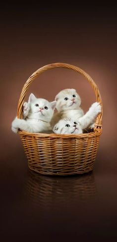 Kittens Cutest, Cats And Kittens, Cute Cats, Animals And Pets, Baby Animals, Cute Animals, Cat Wallpaper, Animal Wallpaper, Cuddle Love