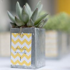 Succulent wedding favor and chevron table number card all in one. LOVE!