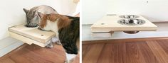 CatastrophiCreations Cat Mod Feeder - Handcrafted Elevated Wall-mounted Feeder Shelf *** Click image for more details. (This is an affiliate link and I receive a commission for the sales)