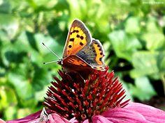 #Naturdesign ist der Ergebnis aus Funktion und Evolution. Einzigartig! #Butterfly #Design #smgdesignshop #smgdesignselect www.smg-design.de